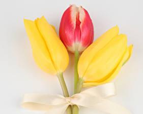 Фото Тюльпаны Крупным планом Серый фон Трое 3 Бантик Цветы