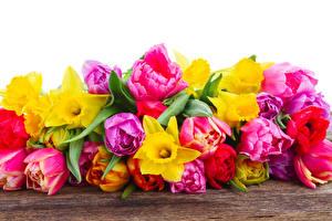 Картинки Тюльпаны Нарциссы Много Цветы
