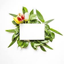 Фото Тюльпаны Шаблон поздравительной открытки Белый фон