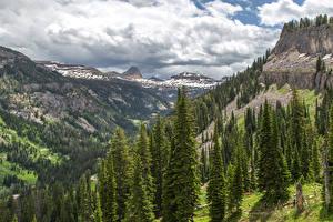 Картинка Штаты Горы Леса Ель Caribou-Targhee National Forest Природа