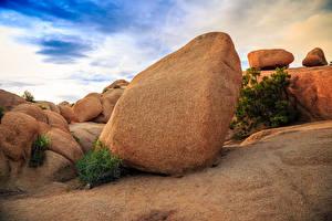 Картинка Штаты Парки Камни Калифорнии Joshua Tree National Park Природа