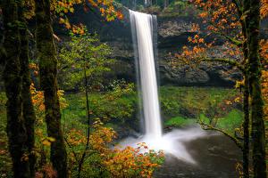 Фотография США Парк Водопады Осенние Утес Ствол дерева Мох Silver Falls State Park Oregon Природа