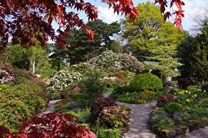 Картинка Великобритания Сады Кусты Деревья Lee Gardens