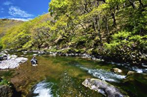 Фото Великобритания Парки Реки Деревьев Exmoor National Park Природа