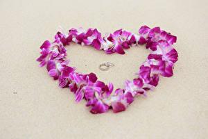 Картинки День святого Валентина Серый фон Сердечко Лепестки Кольца 2 Цветы