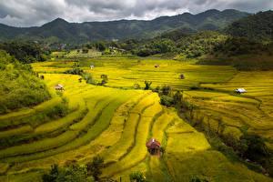 Картинка Вьетнам Поля Холмы