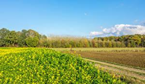 Фотография Бельгия Весна Поля Houwaart Vlaams Brabant