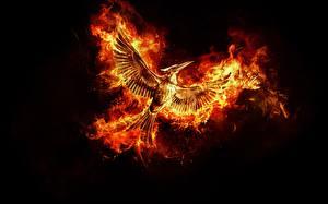 Картинки Птицы Феникс Пламя Черный фон Фантастика