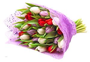 Фотография Букеты Тюльпаны Белый фон Разноцветные