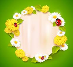 Обои Ромашка Одуванчики Божьи коровки Цветной фон Шаблон поздравительной открытки цветок