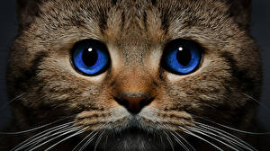 Фото Коты Глаза Морда