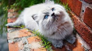 Фотографии Кошки Смотрит Котята Животные