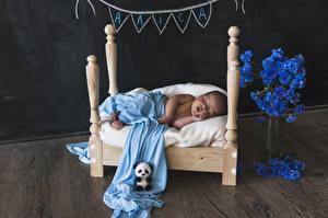 Картинки Васильки Мишки Кровать Грудной ребёнок Спящий Дети