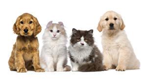 Картинки Собаки Кошки Белый фон Щенок Животные