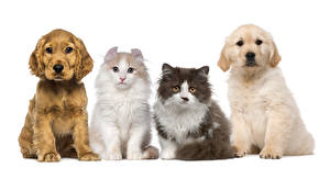 Картинки Собака Кошки Белый фон Щенка животное