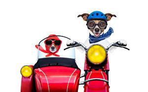 Картинки Собаки Мотоциклист Белый фон Джек-рассел-терьер Смешные Шлем Животные