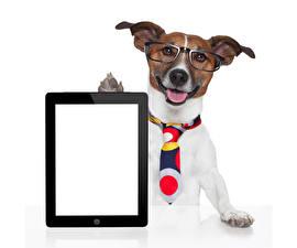 Фотографии Собаки Планшет Белый фон Джек-рассел-терьер Очки Галстук Шаблон поздравительной открытки Животные