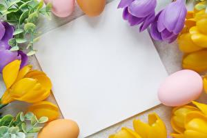 Обои Пасха Крокусы Шаблон поздравительной открытки Яйцами Лист бумаги