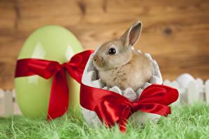 Картинки Пасха Кролики Детеныши Яйца Бантик животное