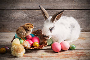 Картинка Пасха Кролик Птенцы Доски Яйца Животные