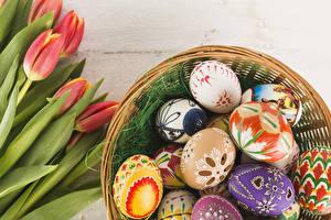 Фотография Пасха Тюльпан Яйца Красный Дизайна цветок