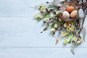 Картинки Пасха Яйца Ветвь Гнездо verba