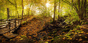 Обои Финляндия Парки Осенние Мост Камни Деревья Листва Teijo National Park Природа