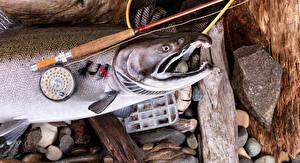 Обои Ловля рыбы Рыба Удочка Камни Лососи Спорт