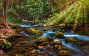 Картинки Лес Камни Ручей Лучи света Мох Природа