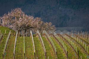 Фото Франция Весенние Поля Цветущие деревья Mittelwihr Природа