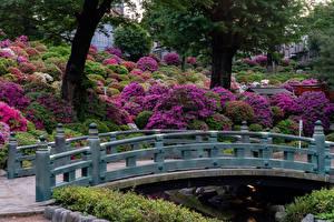 Фото Япония Киото Парки Мост Кусты Природа