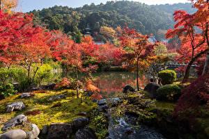 Фото Япония Киото Парки Речка Деревья Природа