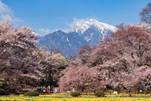 Фото Япония Парки Гора Цветущие деревья Hokuto Yamanashi Prefecture Природа
