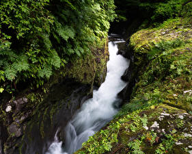 Фотографии Япония Водопады Утес Мох Takachiho Gorge Природа