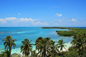Обои Мексика Побережье Море Пальма Cancun Природа