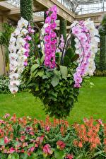 Фотографии Орхидея цветок
