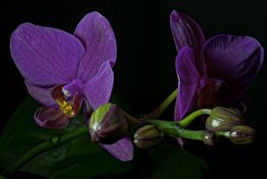 Фотографии Орхидеи Крупным планом Фиолетовый Цветы