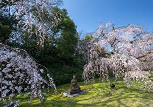 Обои Парки Весенние Цветущие деревья Скульптуры Будда Природа
