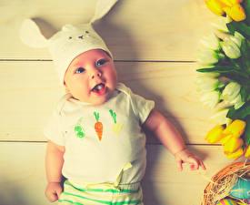 Обои Кролики Пасха Доски Младенцы Мальчишки Взгляд ребёнок