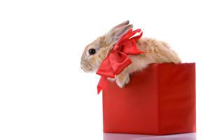 Картинки Кролики Белый фон Коробка Бантик Животные