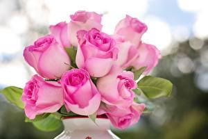 Обои Розы Крупным планом Розовый Цветы картинки