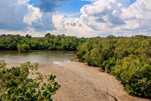 Фотография Сингапур Парки Озеро Леса Песок Sungei Buloh Природа