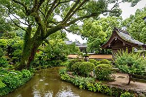 Фото Сингапур Парки Пруд Деревья Кусты