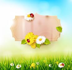 Картинки Весна Ромашки Божьи коровки Шаблон поздравительной открытки Трава Природа