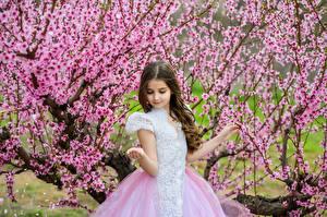 Фото Весенние Цветущие деревья Девочки Платье