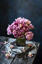 Фотографии Тюльпаны Лепестки Цветы
