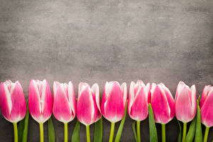 Картинка Тюльпаны Розовая цветок