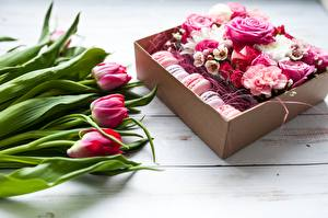 Фотография Тюльпаны Роза Макарон Цветы