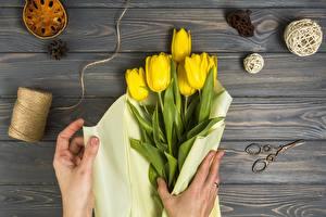 Фотографии Тюльпаны Желтый Руки Доски Цветы