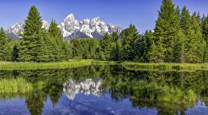 Фото Штаты Парки Озеро Горы Леса Ель Grand Teton National Park Природа